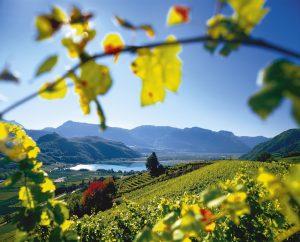 monitoraggio social media azienda vinicola