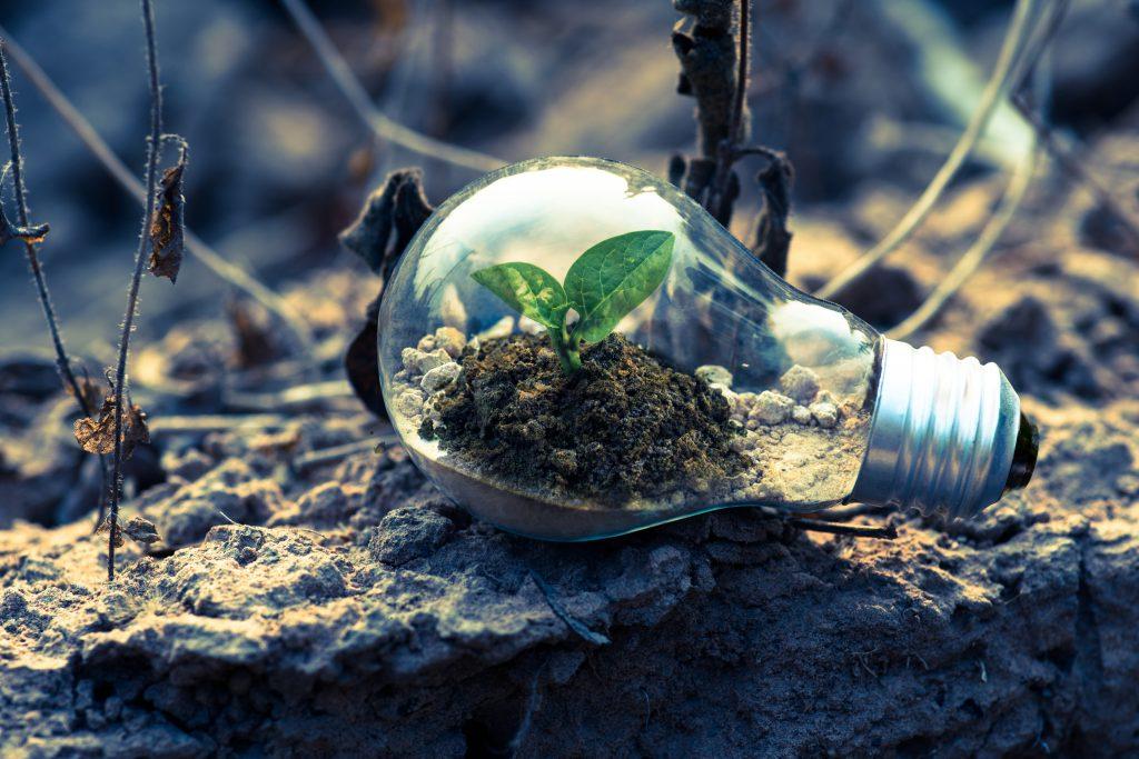 sostenibilità, green economy
